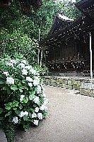 御霊神社IMG_1549.JPG