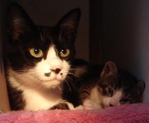 母猫さんと男の子
