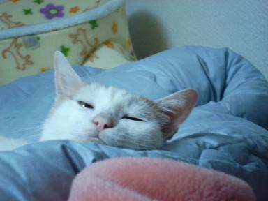 かーかお帰り。でも眠いにゃ
