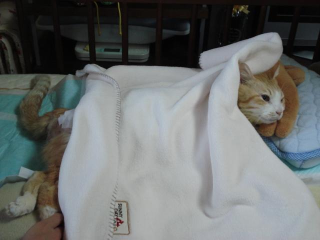 ふかふか毛布でねんね