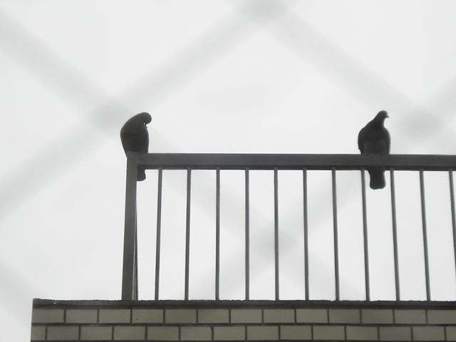 親鳥.JPG