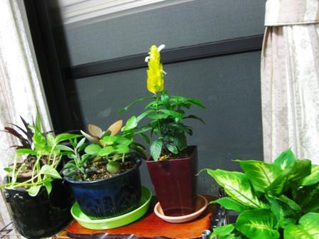 観葉植物1