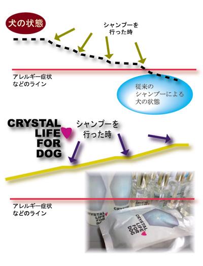 犬のアレルギー.jpg