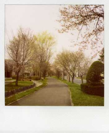 20090503桜