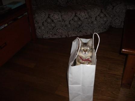 20100122Melody in the bag.JPG