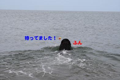 ahiru10.JPG