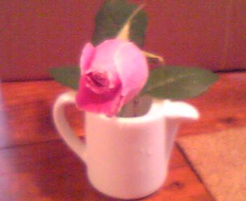 090725ピンク薔薇.jpg