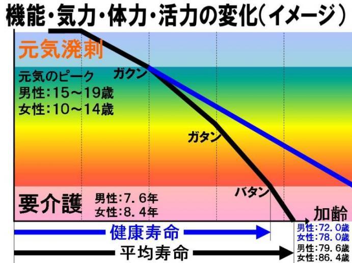 機能・気力・体力・活力の変化2.jpg