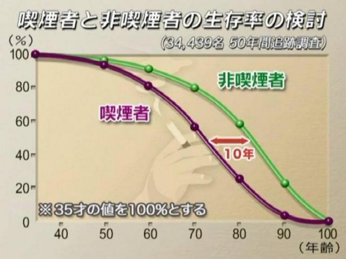 喫煙者と非喫煙者の生存率.jpg