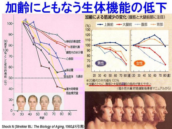 加齢にともなう生体機能の低下.jpg