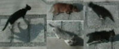 監視カメラに写った猫たち