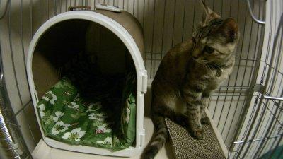 猫に座布団