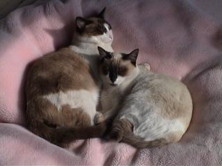 いつも一緒に居ることが多い猫2匹