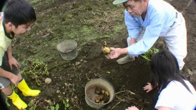 畑でジャガイモ掘り