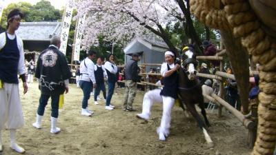 馬駆け(おまんと)祭り