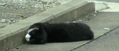 路上で背中を掻く猫