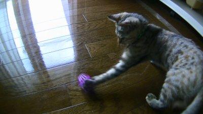 ボールのオモチャにパンチする猫