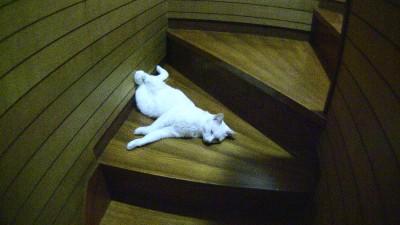 階段の途中で寝るネコ