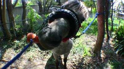 馬にニンジン