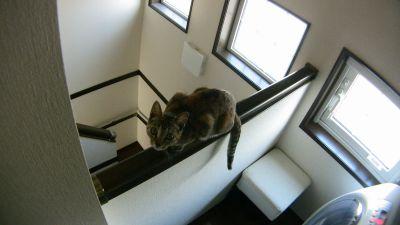 笠木に乗る猫