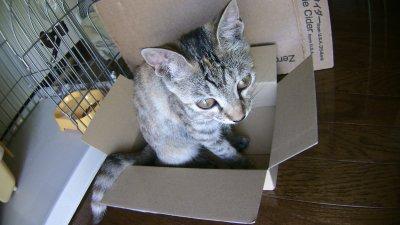 小さい箱に入るネコ