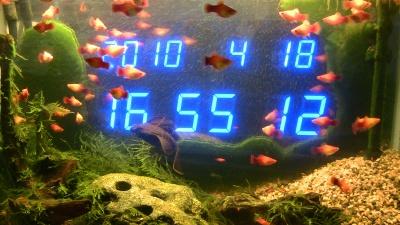 水槽と時計と藻とプレコ