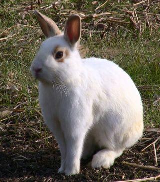 ミルクという名の雄ウサギ