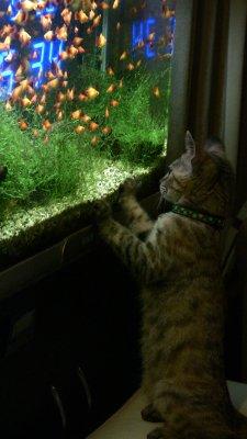 猫と熱帯魚の水槽