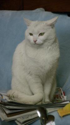 郷里で飼っている猫:ミュー