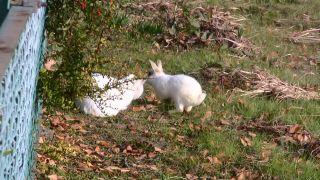 猫に近寄るウサギ