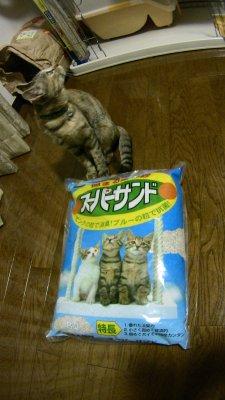 猫のトイレの砂