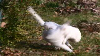 ウサギに襲われるネコ