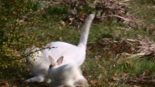 一方的にウサギにやられる猫