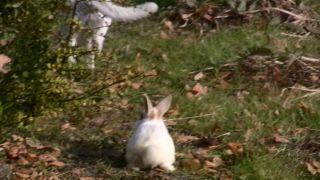 ウサギに追われる猫