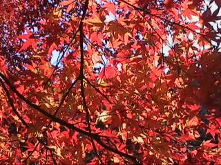 高尾山の紅葉狩り