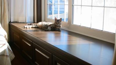 出窓の上で日向ぼっこするネコ