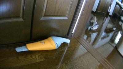 ハンディクリーナーを敵視する猫