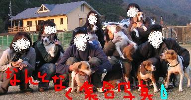 ビーグル犬LOCOの島生活