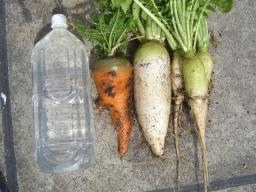 収穫野菜2.jpg