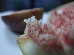イチジクの花.jpg