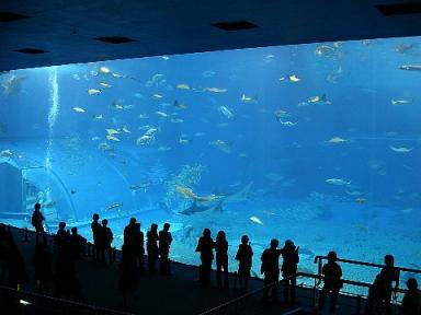 世界最大級水槽