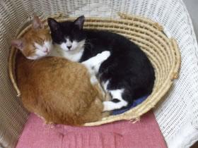 他の猫たちとも仲良し