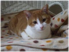 美猫のみおちゃん