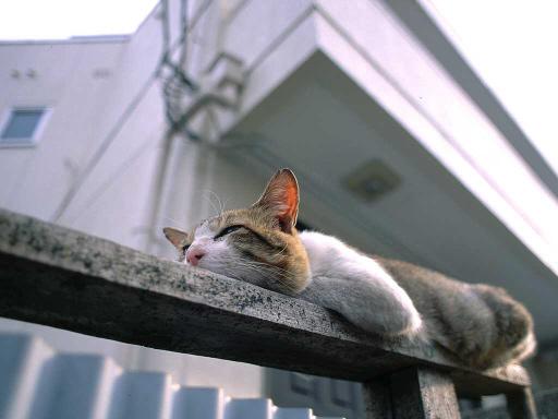 猫・昼寝.jpg