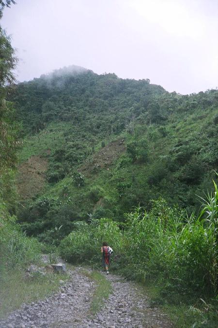 この坂の上はもっとジャングル!