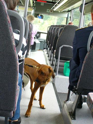 バスに乗ってきたわんこ