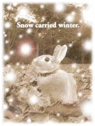 モモヤンの初雪