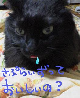 にゃん32.jpg