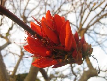 ビーデビーデの花(11/02/22)