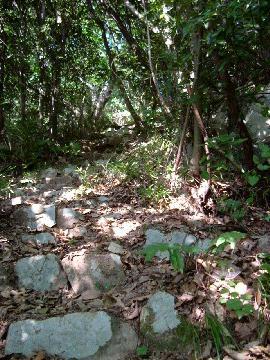 石段を登る